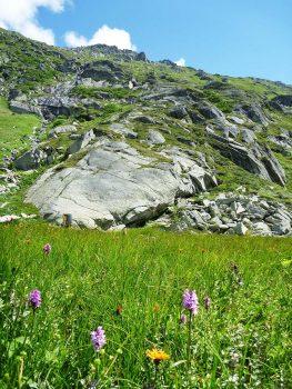 Gotthard_Bl++mchen